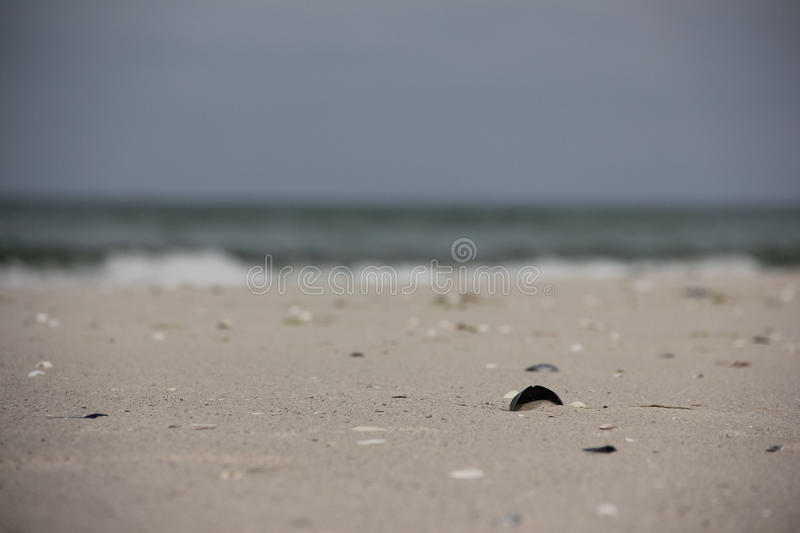 Shell im Sand stockfoto
