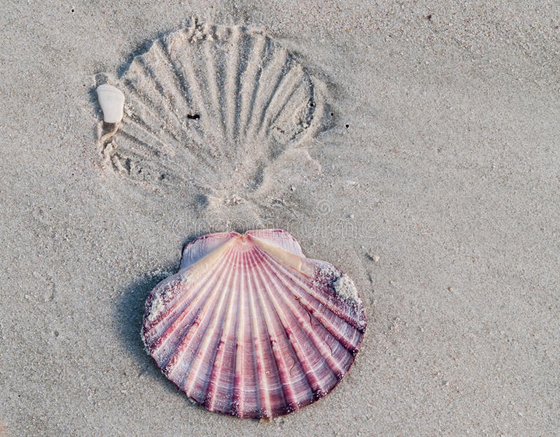 Download Shell imprint. stock photo. Image of sand, background - 31910368