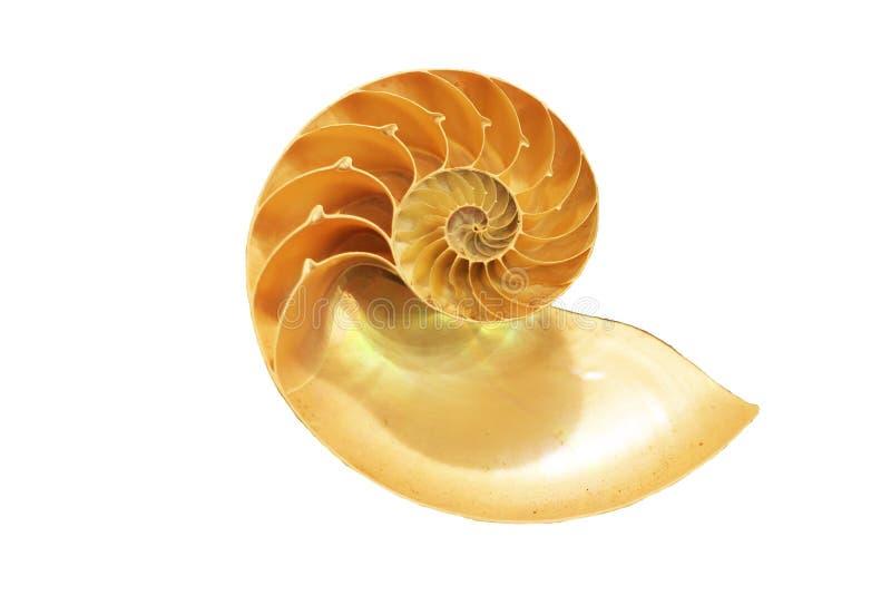 Shell isolado do nautilus fotos de stock royalty free