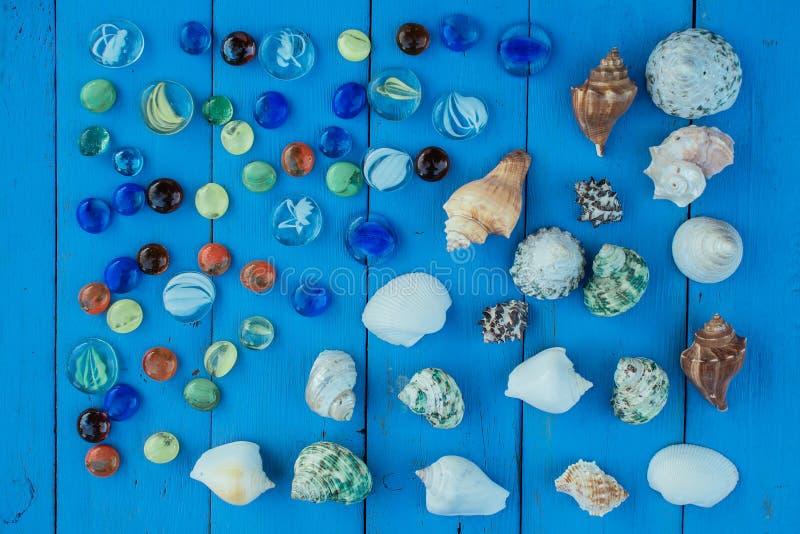 Shell kolekci seashell fotografia royalty free