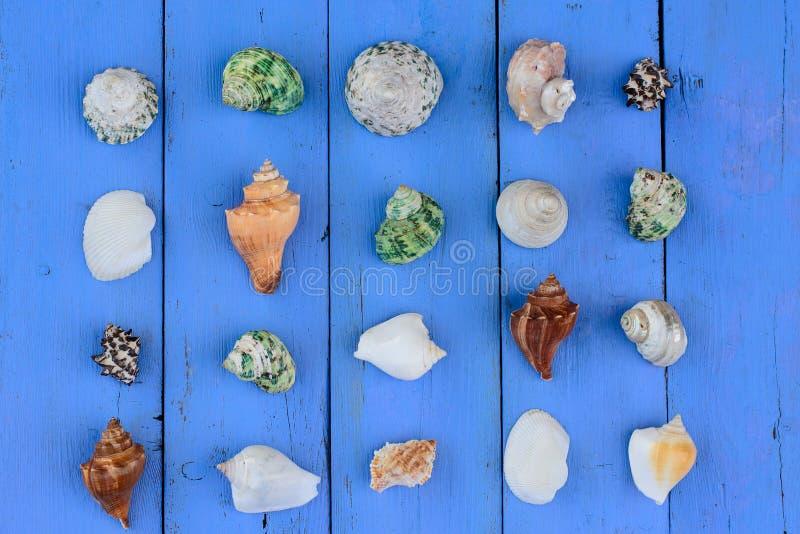 Shell kolekci seashell obrazy royalty free