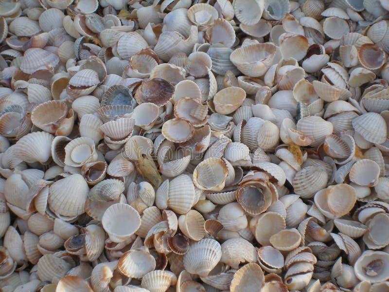 Shell kulle arkivbild