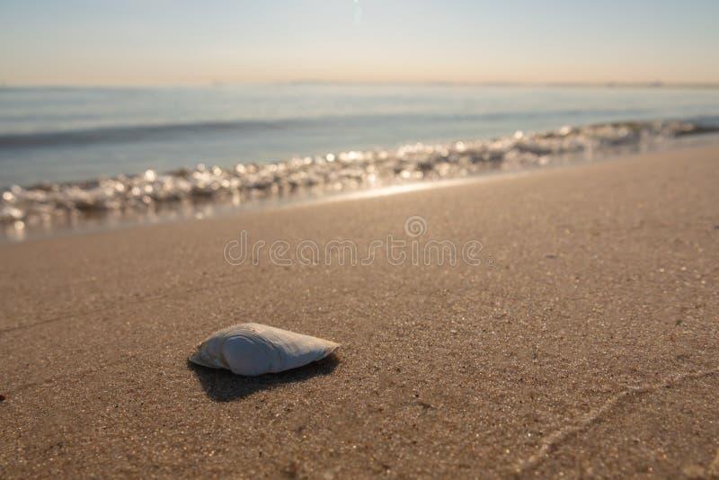 Shell ligt op het strand van de Oostzee stock foto's