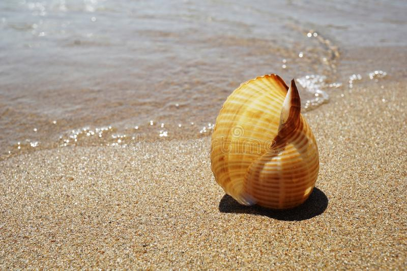 Shell lying on the sand by the sea royalty free stock photo