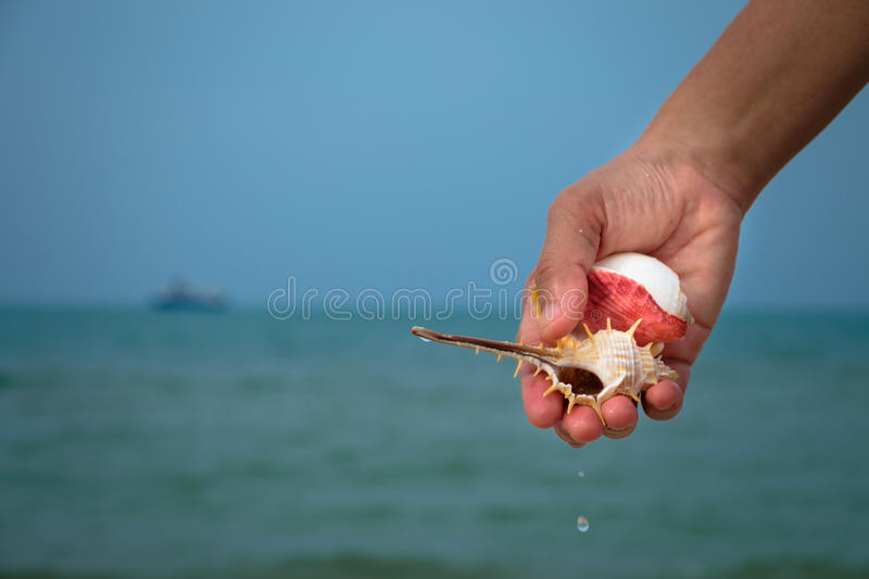 Shell stock images