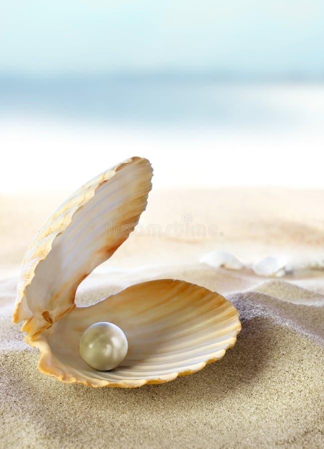 Shell met een parel stock foto