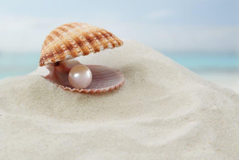 Shell met een parel royalty-vrije stock foto
