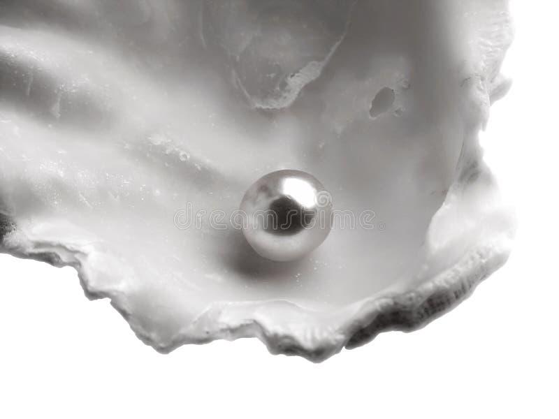 Shell met parel stock foto