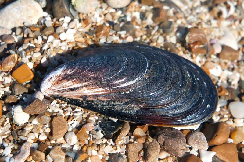 Shell-mosselen op stenen royalty-vrije stock afbeelding