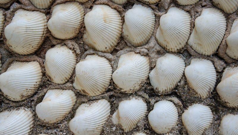 Shell mura, textura do fundo imagens de stock