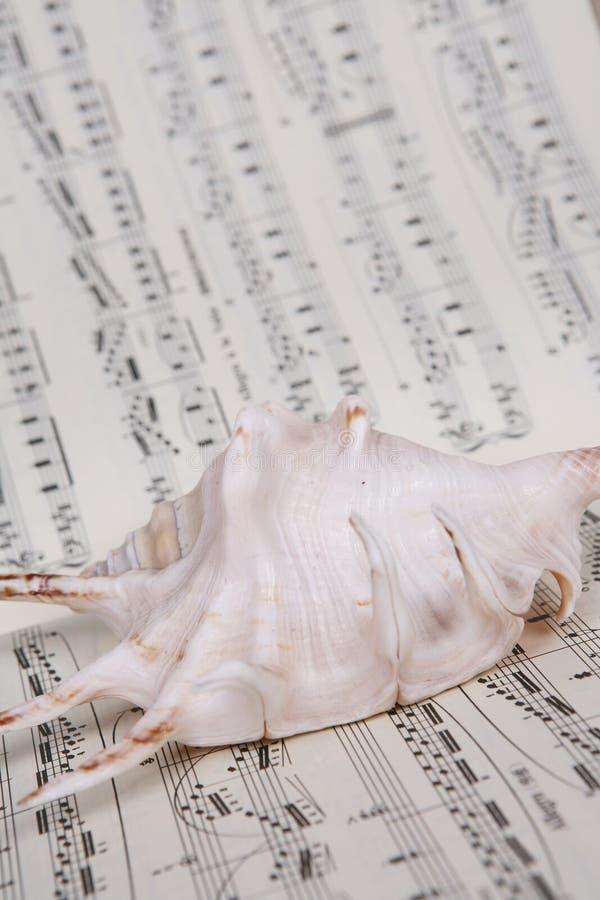 Shell on music Music score book. A shell on music Music score book royalty free stock photo