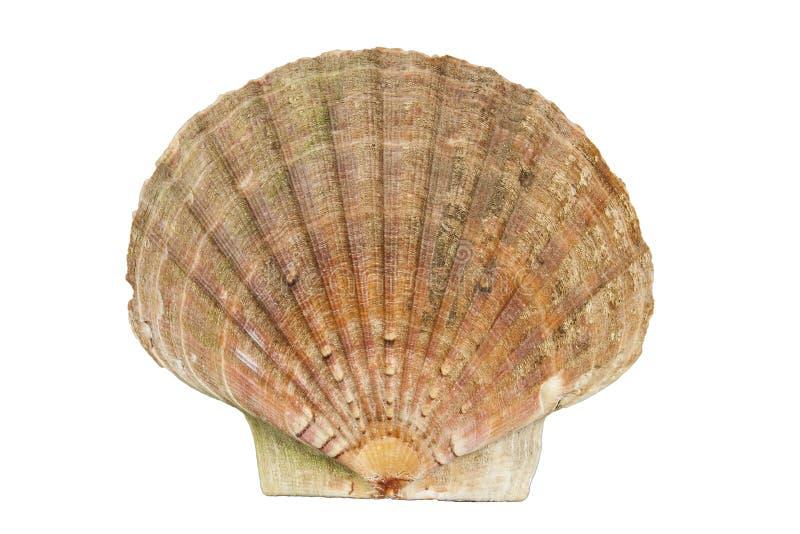 Shell musslahav royaltyfri bild