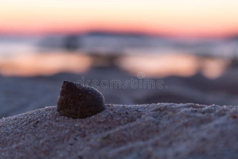 Shell na areia na praia fotografia de stock royalty free