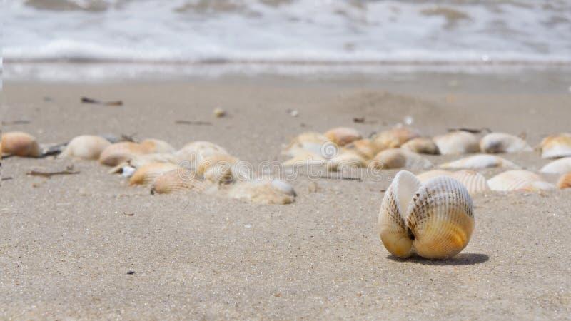 SHELL NA PIASKOWATEJ plaży morze fotografia stock