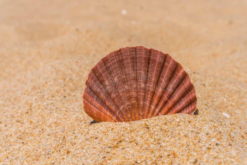 Shell na piaskowatej plaży obraz stock