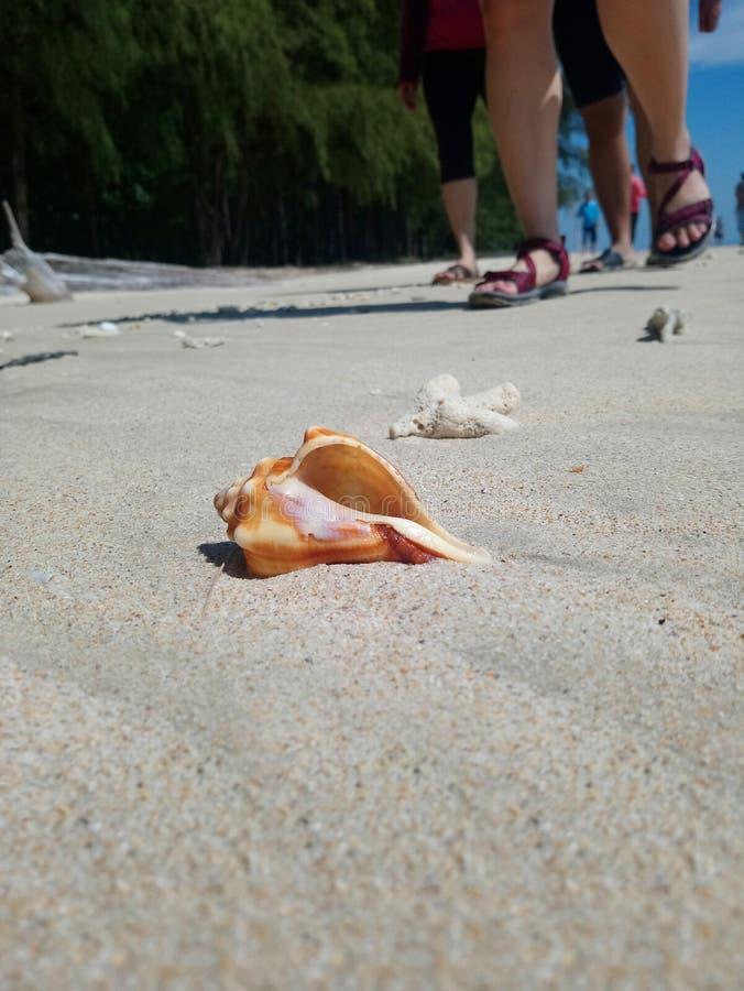Shell na piasku obrazy stock