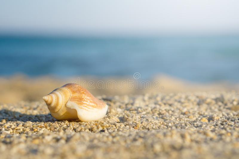 Shell na piasku przy plażą Na tle błękitny morze obrazy royalty free