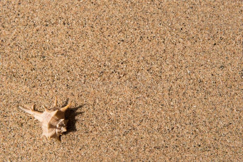Shell na piasku, tło obrazy stock