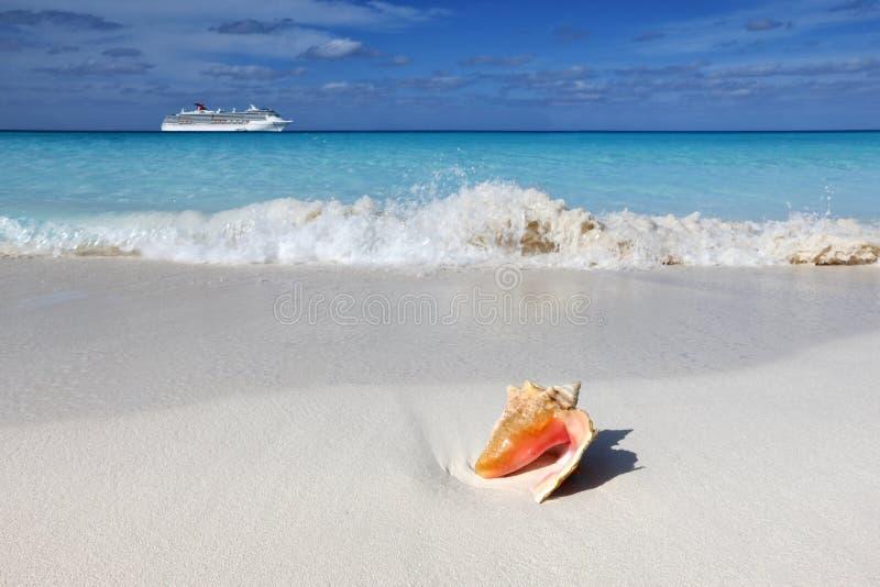 Shell na piasku wyrzucać na brzeg zdjęcia stock