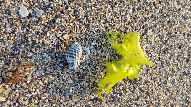 Shell na plaży zdjęcie stock