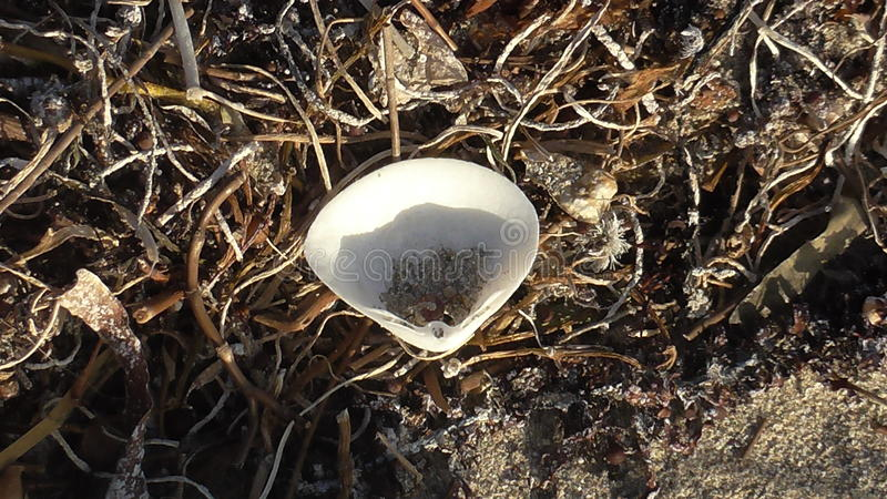 Shell na plaży zdjęcie royalty free