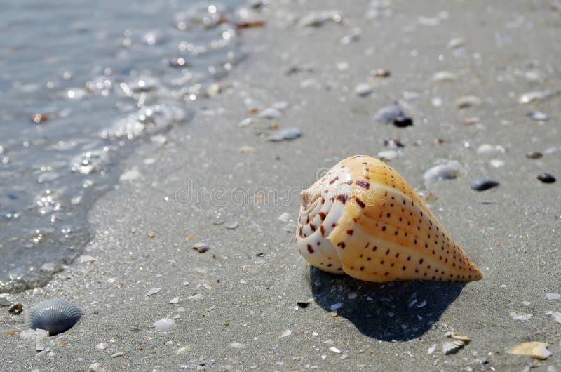 Shell na praia imagens de stock royalty free