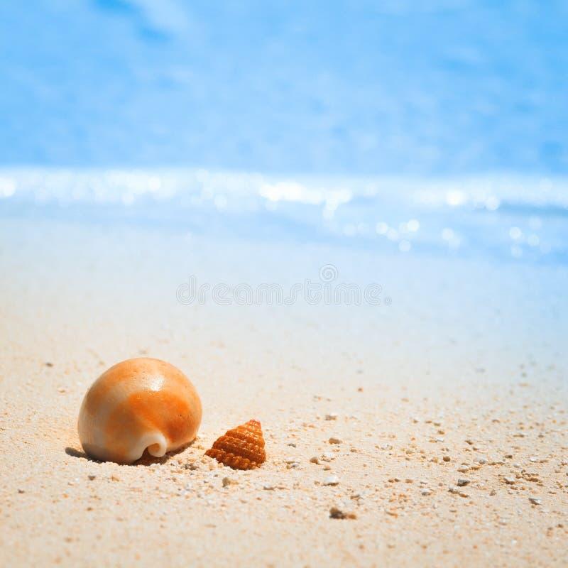 Shell na tropikalnej plaży zdjęcie royalty free