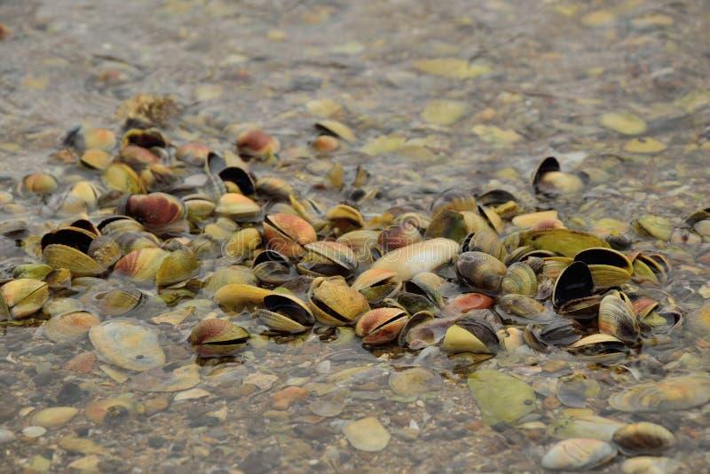 Shell naturais fotografia de stock