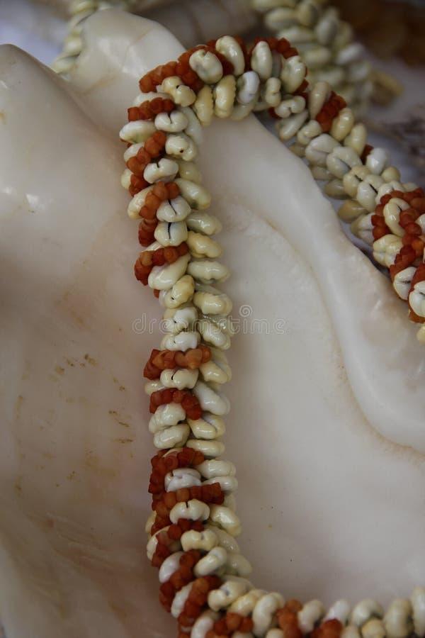 Shell Necklace imagem de stock