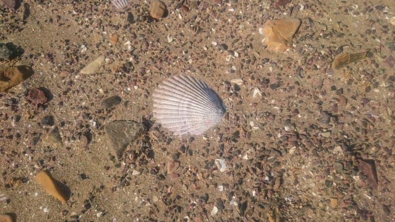 Shell nella spiaggia struttura immagini stock libere da diritti