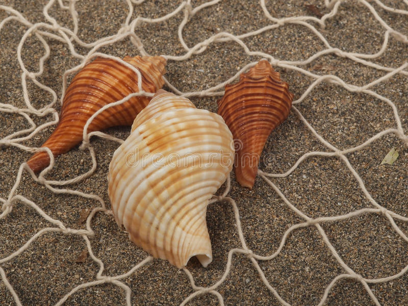 Download Shell in the net stock photo. Image of green, equipment - 29028972