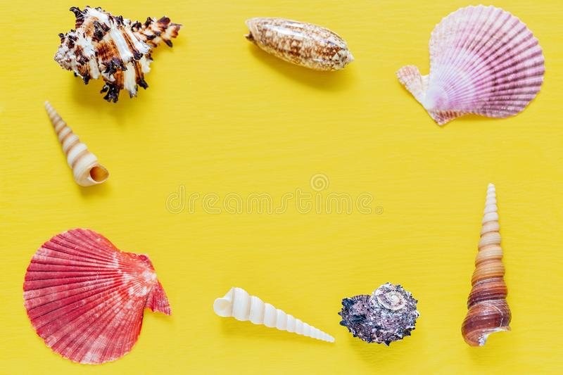 Shell no amarelo brilhante Fundo bonito do verão Configuração lisa Textura dos shell fotografia de stock