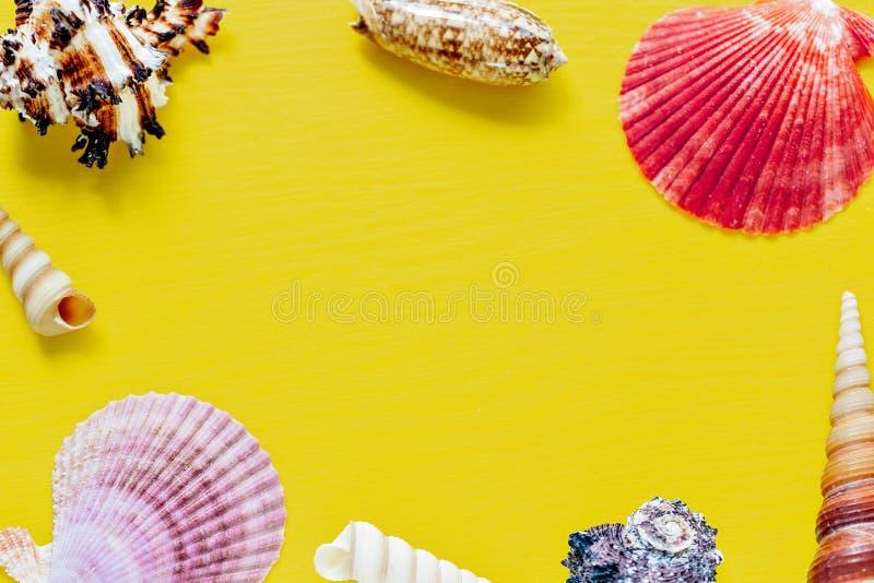 Shell no amarelo brilhante Fundo bonito do verão Configuração lisa Textura dos shell fotos de stock royalty free