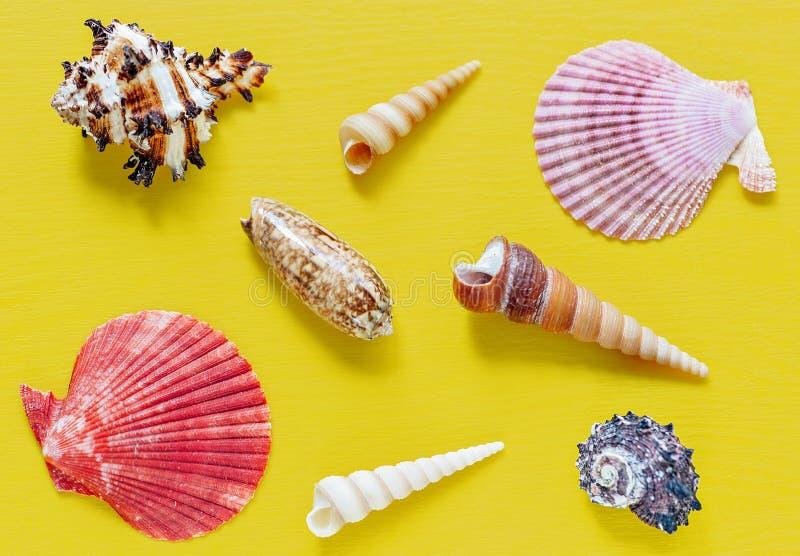 Shell no amarelo brilhante Fundo bonito do verão Configuração lisa Textura dos shell imagens de stock royalty free