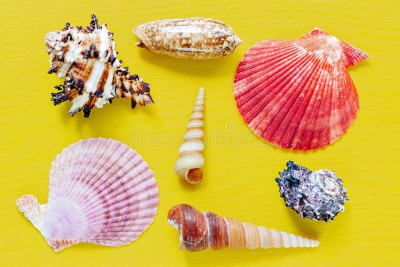 Shell no amarelo brilhante Fundo bonito do verão Configuração lisa Textura dos shell imagens de stock