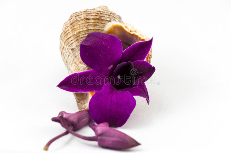 Shell och orkidé royaltyfria foton