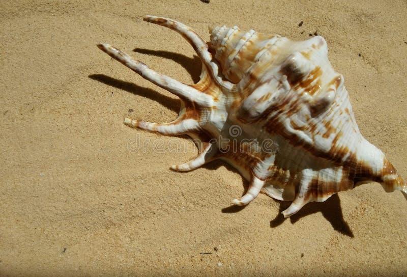 Shell och sand 4 arkivfoton