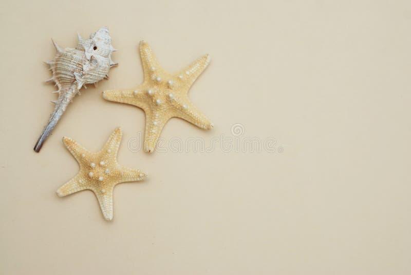 Shell och starsfish över elfenbenfrilägebakgrund Kopiera utrymme för text Fishstar fotografering för bildbyråer