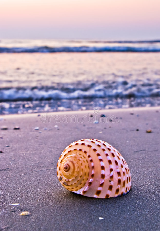 Free Shell On Beach Royalty Free Stock Photo - 3325025
