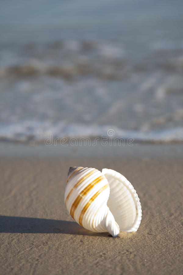 Free Shell On Sand Stock Images - 11247324