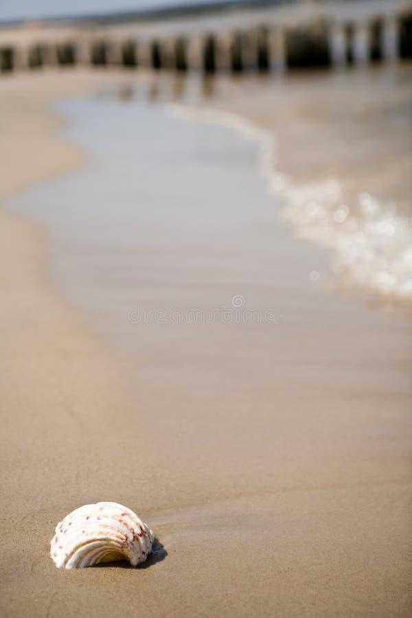 Shell op een strand stock foto