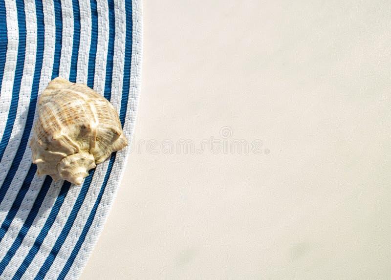 Shell op een witte achtergrond stock afbeeldingen