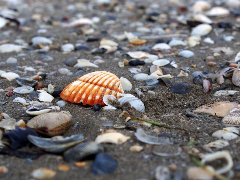 Shell op een zandstrand stock foto's