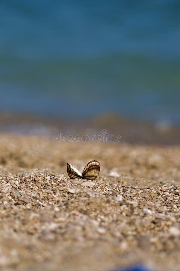Shell op het Baska-strand in het Eiland van Kroatië Krk, sluit omhoog stock fotografie