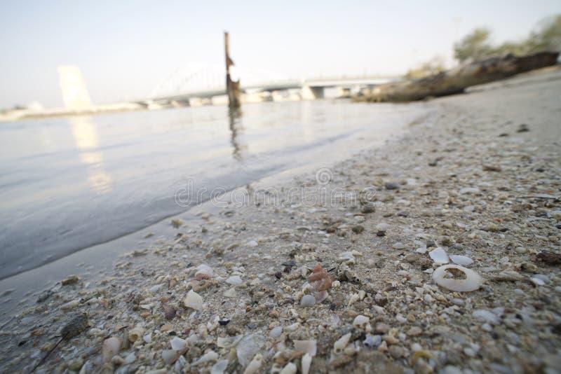 Shell op het overzees van het strandzand royalty-vrije stock foto