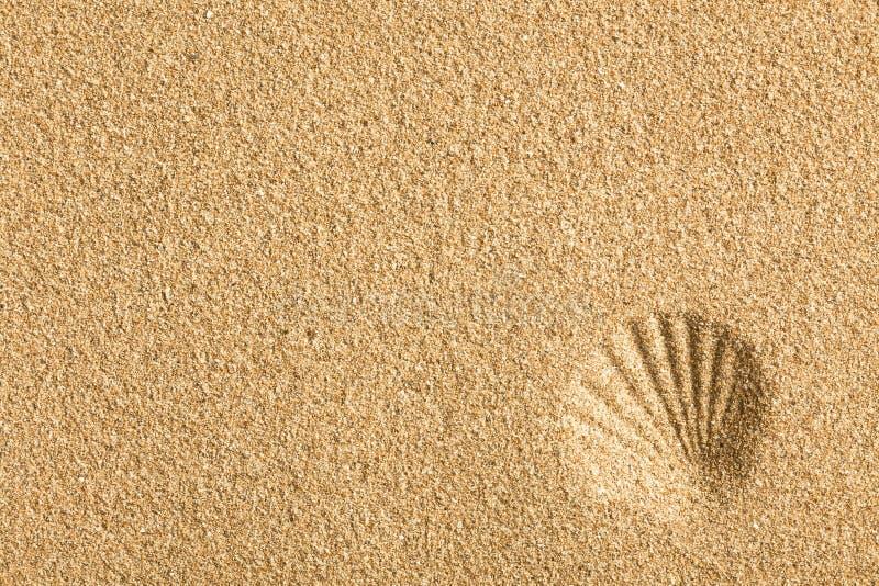 Shell op het zand wordt gestempeld dat royalty-vrije stock foto