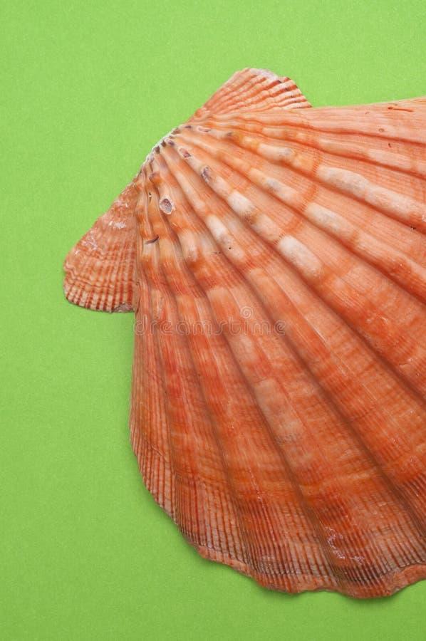 Shell op Moderne Trillende Groen royalty-vrije stock foto