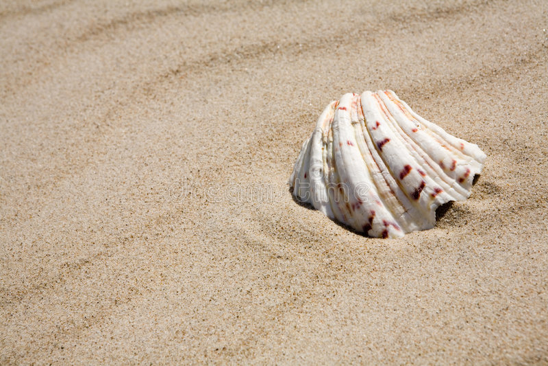 Shell op strand royalty-vrije stock afbeeldingen