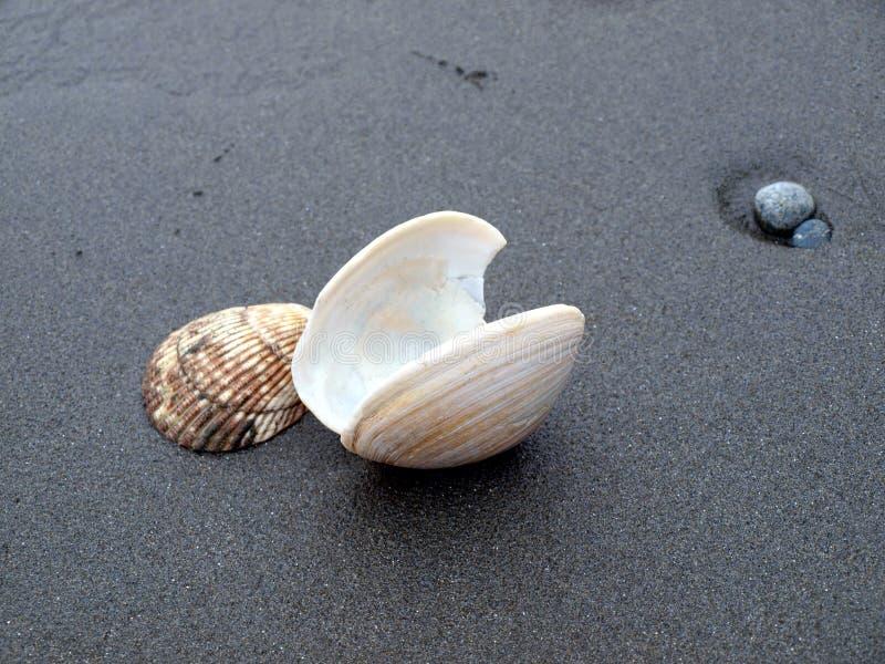 Shell op zand stock foto's