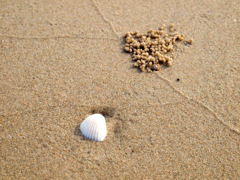 Shell op zand royalty-vrije stock afbeeldingen